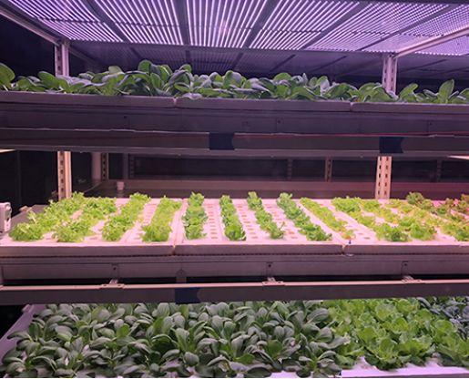 刘厚诚:植物照明的进步需农业与照明相辅相成 螺帽